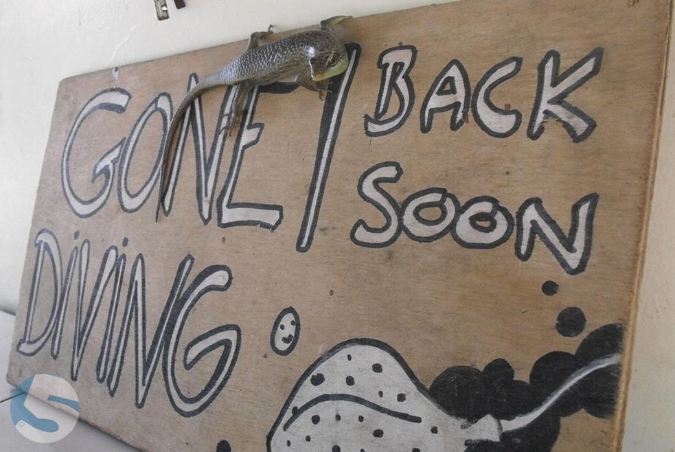 Gone Diving Back Soon