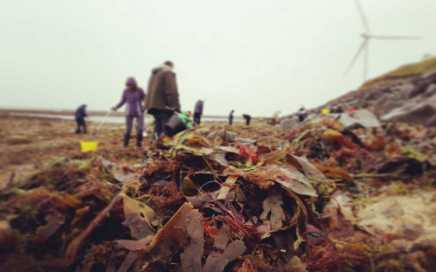 Volunteers from The Fifth Point Diving Centre had a hard job sifting through piles of seaweed to remove rubbish