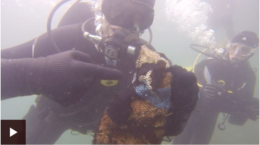eco divers cleaning up the north sea