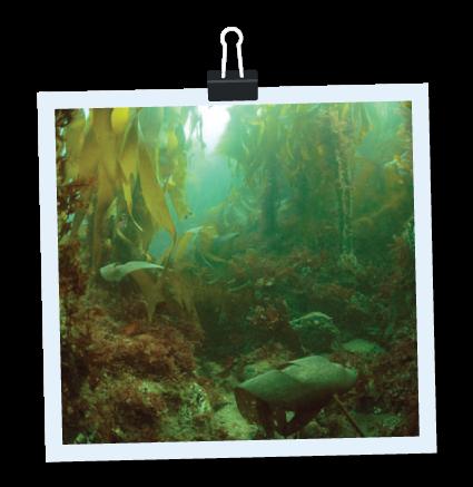 PADI Underwater Naturalist Specialty