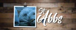 Scuba Diving St Abbs