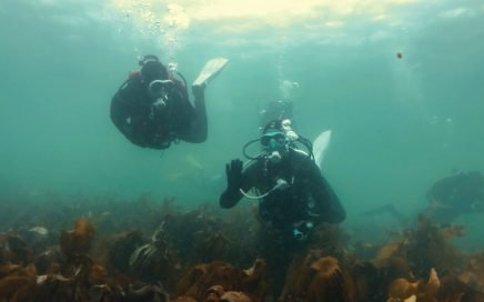 The buddy system for scuba diving