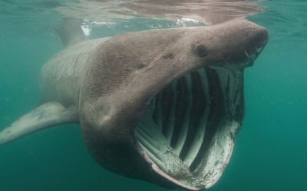 protecting sharks in the UK